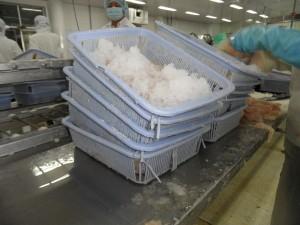 Met kapotte mandjes werken waar scherpe plastic deeltjes af kunnen komen een probleem? In Zuid Oost Azie niet. No ploblem. BRC en IFS? No ploblem sir. Inspection by Velzeboer? Velly big ploblem!