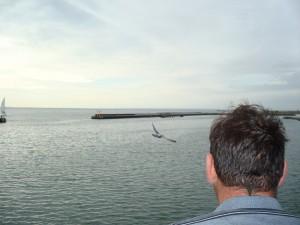 Hier laat schipper JdBteU een duif weer los nadat dit diertje zich een paar dagen heeft kunnen herstellen en intussen zonder protest van de schipper zijn stuurhuis volgescheten had.