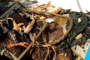 Dit is het treurige beeld weer van de proefvisserij in het natuurgebied van 22 jaar oud...De scholbox.