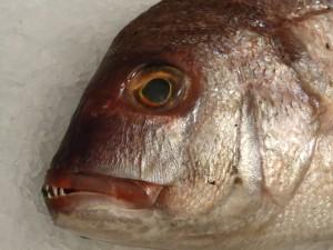 Het wordt hoog tijd dat de Nederlandse visserij haar tanden laat zien aan de Brusselse politiek.