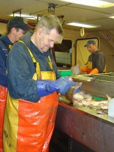 Aan boord moet de vis meteen vakkundig bewerkt worden. Met strippen worden de darmen en galblaas van de schol verwijderd. Zo blijft de smaak beter behouden en proeft de consument 100% Noordzeevis dat op vakkundige wijze gevangen is. Albert Romkes lijkt zijn vak te verstaan.