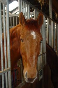 Paarden zijn edele dieren. Hun vlees moet zeker niet gebruikt worden om hamburgers te verklooien.