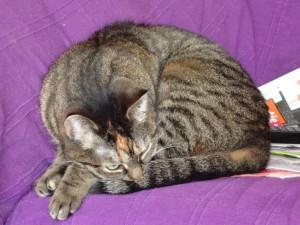 De NVWA wordt door velen in de voedingsmiddelenindustire als een slapende kat gezien. Het wordt hoog tijd dat dit beest haar territorium gaat verdedigen.