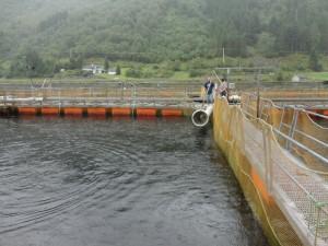 Tijdens ons werkbezoek aan Noorwegen in de zomer van 2013 hebben wij kunnen vaststellen dat de zalmkweek een massa industrie is. Vanuit deze vijver worden de vissen rechtstreeks naar de slachterij gepompt war deze bijna geheel automatisch verwerkt wordt. De controles zijn vanwege de mechanisering minimaal.