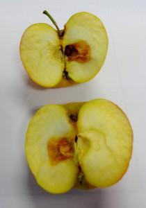 """SAupermarkt ellende met appels. """"Wilt u een nieuwe zak appels?"""" """"Nee laat maat zitten"""""""