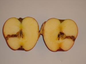 Fruit kent geen tht aanduiding. Het zou wel handig zijn om de oogstdatum te vermelden. Daar heeft de consument wat aan. Die begrijpt dan ook beter waarom zijn appelen opeens in de aanbieding zijn in de supermarkt. Vaak wordt de oogst van het jaar daarvoor eventjes weggewerkt.