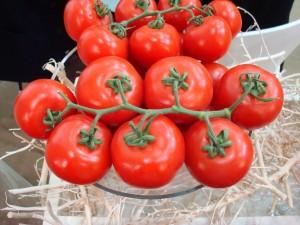 Hollandse tomatentelers zijn hooggeschoolde vaklui die iets meer verstand van voedselveiligheid hebben dan hun vakbroeders uit Bangladesh.