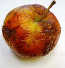 Deze appel lijdt aan dehydsratatie. Hier moet water aan toegevoegd worden.