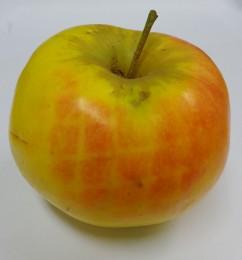 Een appel dat van een boom valt op een Lupinus Augustinus, mosterdplant (biobemester), tarwe of een sojaplant, kan maar liefst 4 allergenen bevatten. De groenteboer zal hier tureluurs van worden. Hoever moet de appelteler gaan? Alle appelen met een netje opvangen? Het heeft hier alle schijn van.